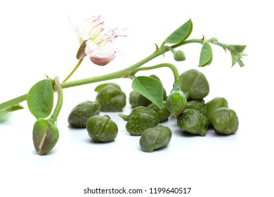 Capers, white background. Caper plant, green leaves and flower on white