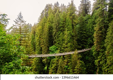 Capilano Suspension Bridge through the forest in Vancouver