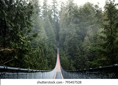 Capilano Suspension Bridge. Vancouver British Columbia Canada. Nature. Evergreen.