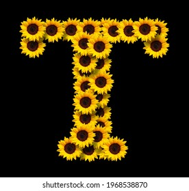 Capital letter T made of yellow sunflowers flowers isolated on black background. Design element for love concepts designs. Ideal for mothers day and spring themes
