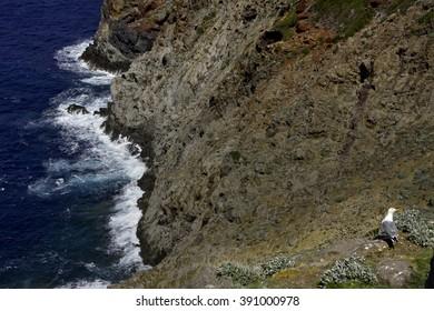 Capraia Island, Arcipelago Toscano National Park, Tuscany, Italy, trekking trail to the tower of Zenobito and Calarossa among arbutus trees, asfodelie flowers and gulls