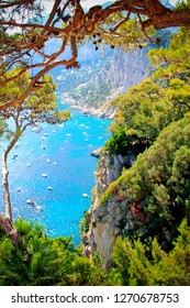 Capri. Italy. View of the sea through the pine branches.