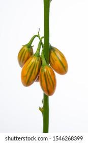Capsicum Aubergine (Peper) - flower