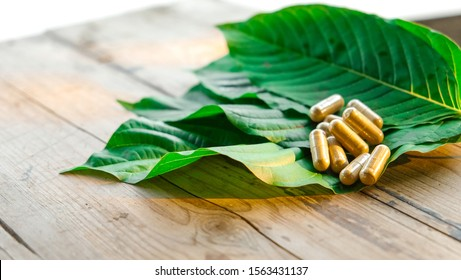 capsule on kratom leaf (Mitragyna speciosa) Mitragynine on wooden ,Drugs and Narcotics,Thai herbal which encourage health