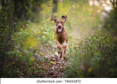 caption of flying running happy dog in autumn time