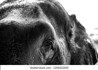 Captivating close up photos of elephants
