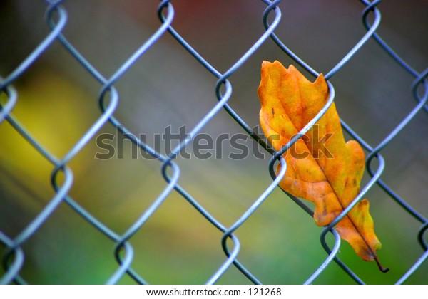 Captive leafe