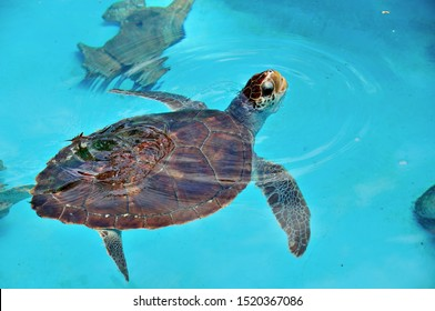 captive sea turtle swimming in the sun