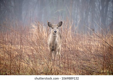 Capture of a lone deer in a local park
