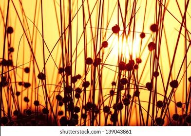 a capture of the sun through a batch of plants stalks stem