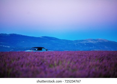 car cabriolet rides in the evening along a flowering lavender field