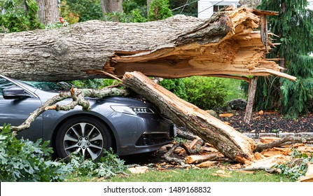 A car crushed with a tree on top of it after the tree split and fell during a wind storm on Long Island New York.