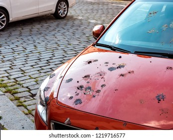 Car Damage by Bird Droppings