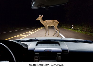 In the car ,deer walking on the road at night in the forest as background.;