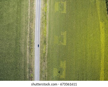 Car driving through agricultural fields of sunflowers