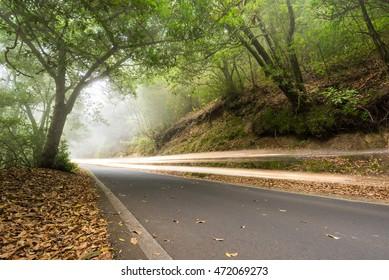 Car light trails in the foggy forest, Anaga, tenerife, Canary island, Spain.