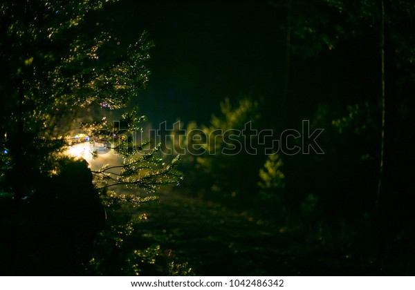 Car lights through pine trees in night. Road in Dark wood. Amazing night in forest.