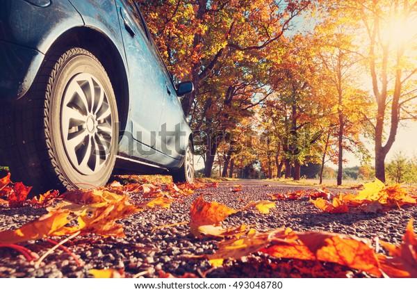 Auto auf Asphaltstraße am Herbsttag im Park