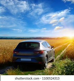 car on a dirt road in a field of sunflowers and wheat with sunlight