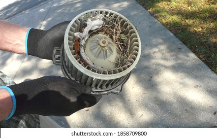 A car owner is preparing to clean out a mouse nest in the fan blower motor cage, also known as a squirrel cage. It was lined with a dryer sheet, leaves, and twigs.
