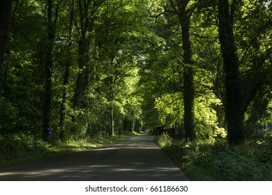 Car road in a forest, France
