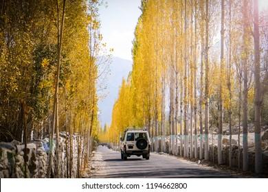 A car is running on the road towards Khaplu among yellow leaves poplar trees in autumn. Skardu, Baltistan, Pakistan.