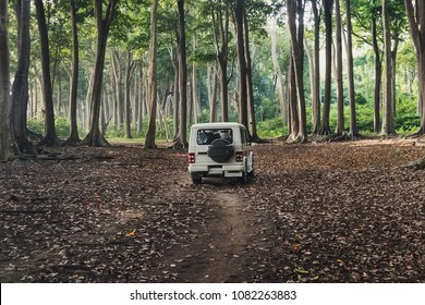 Car SUV on forest road. White car tourist police in the woods of Havelock island, Andaman and Nicobar Islands, India