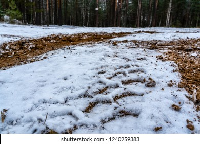 Car Tire Marks on an Empty Field Covered With Snow, Wood in the Background