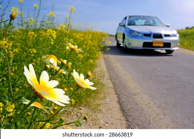 car traveling at springtime chamomile blooming