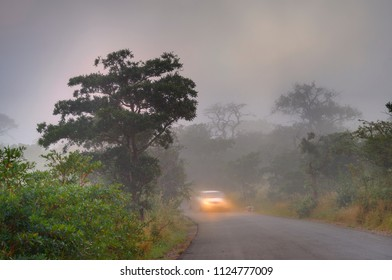 Car travels through Natal Sand Forest through a morning fog in a game reserve