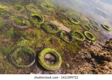 Car tyres discarded at an Australian beach grow old but never degrade or decompose.