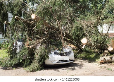 Car under fallen tree. tree fall down on car during hurricane. Insurance problem, bad luck, car parking concept.tree on a car after hurricane damaged .vehicle damaged by fallen tree during storm.