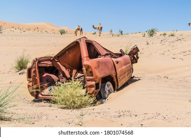 Car wreck in the Desert of Dubai. Burned some years ago. Camels in the background.