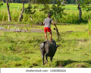 Carabao Ride in the Philippines