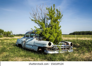 A caragana tree is growing out of the hood of an old classic car in a field