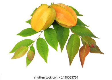 Carambola or star apple ( starfruit ) on isolate white background,Close up healthy carambola or star apple food isolated.