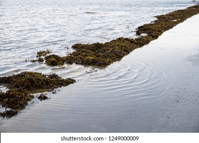 Carantec, France. The submersible passage to Ile Callot, a tidal island only accesible al low tide in the coast of Brittany (Bretagne)