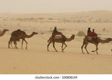 a caravan of Berber nomads of the Tuareg tribe ride their camels through the Sahara Desert of Mali, AFrica,