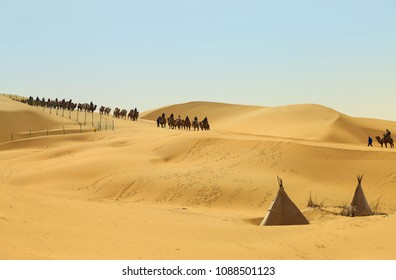Caravan of camels in the Kubuqi Desert, Xiangshawan Resort. Ordos, Inner Mongolia, China.
