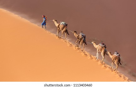 Caravan of camels in the Sahara desert during desert storm, Morocco