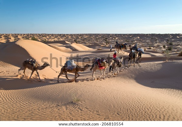 Caravan of camels in the Sand dunes desert of Sahara, South Tunisia