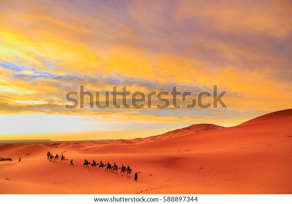 Caravan of camels with tourist in the desert at sunset against a beautiful colorful sky