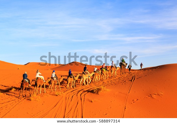 Caravan of camels with tourist in the sand in the desert at sunset