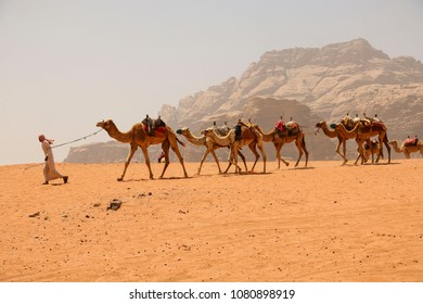 Caravan of camels in Wadi Rum desert in Jordan. Driver-berber with camels on the background red mountains the Valley of the Moon