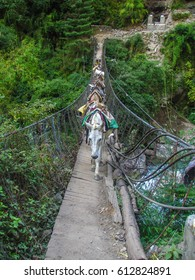 Caravan of donkeys cross the river on a dilapidated bridge in Nepal