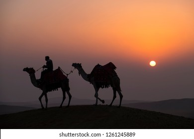 Caravan of two camels walk trough desert at sunrise