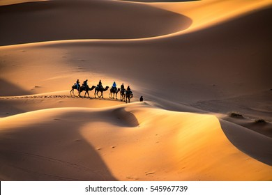 A caravan walking through the golden sand dunes of Erg Chebbi near Merzouga in Morocco, Sahara, Africa