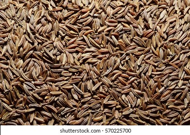 caraway background