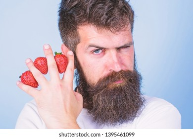 Carbohydrate content strawberry. Metabolic disease. Strawberries safest fruit for sugar levels. Man beard hipster strawberries fingers blue background. Mostly carbohydrates sucrose fructose glucose.