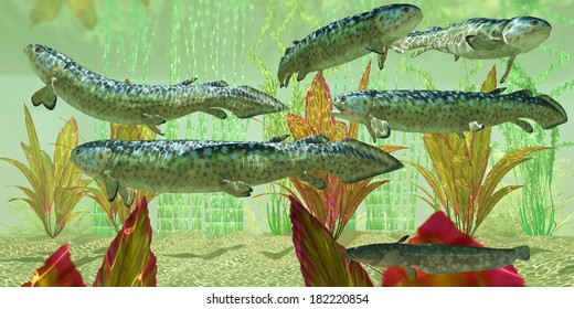 Carboniferous Rhizodus hibberti - Rhizodus hibberti is an extinct group of Carboniferous predatory lobe-finned fish.